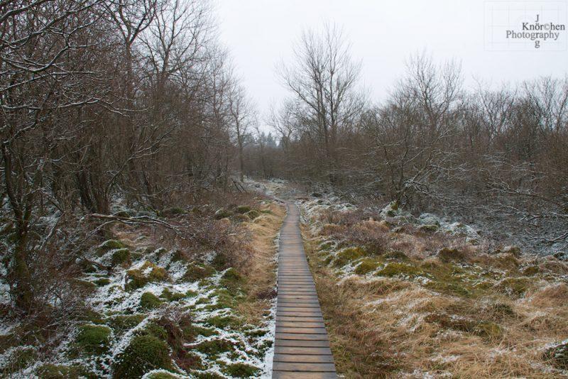 Stege leiten den Weg über das Moor und die Heide