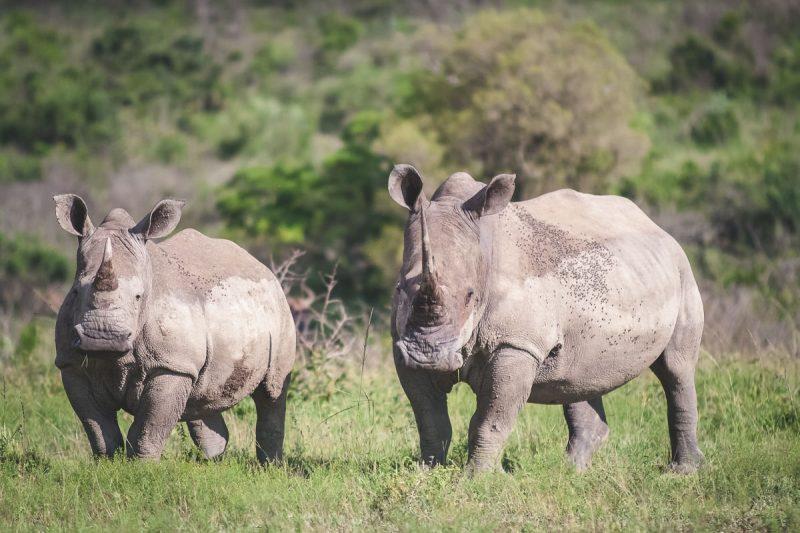 Südafrika 9 von 12 © DLA Online Marketing