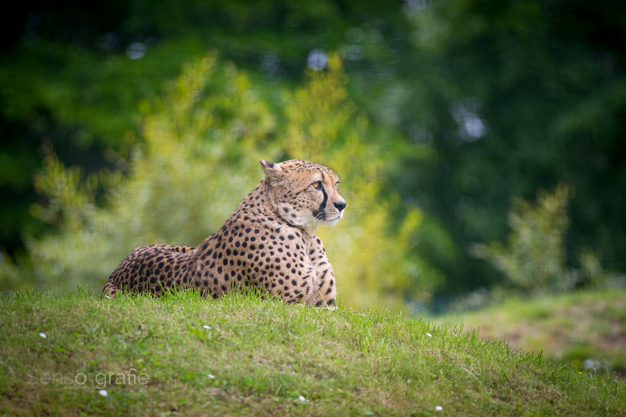 Tierfotografie (EuregioZOO)