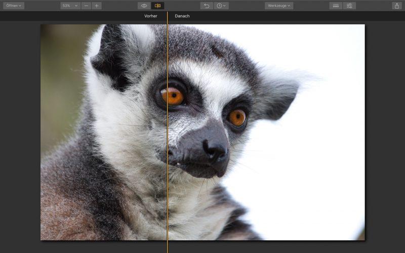 Accent AI Filter im rechten Bildbereich (Danach).