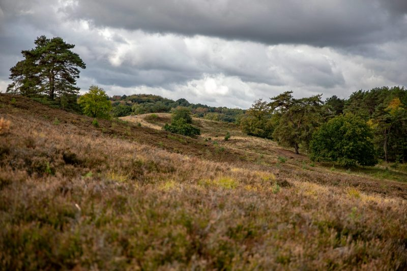 Bildgestaltung gehört auch in die Landschaftsfotografie