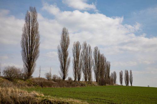 Fast wie in der Toscana - Teil der Mergellandroute