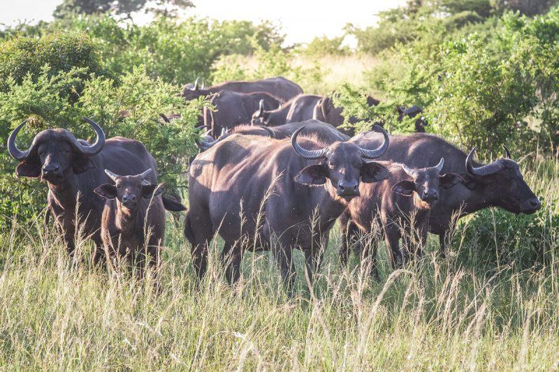 Südafrika 2 von 12 © DLA Online Marketing